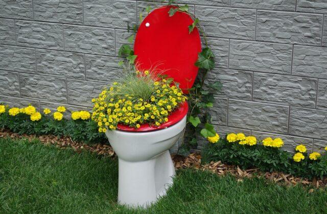 czerwono-biały sedes z wyrastającymi ze środka żółtymi kwiatami
